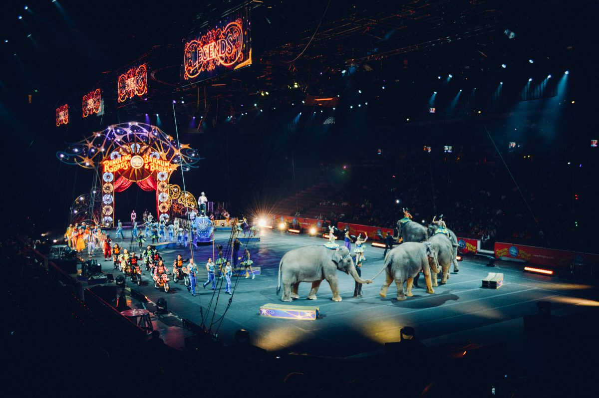 U.S. Circuses Announce Retirement of Elephants from Shows Featured Image