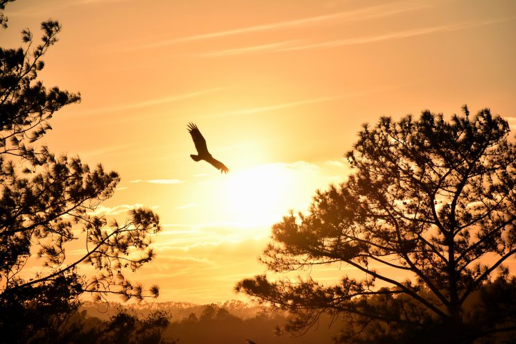 A Haiku For You Featured Image - bird wings love fly